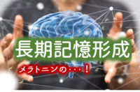 長期記憶形成とメラトニン